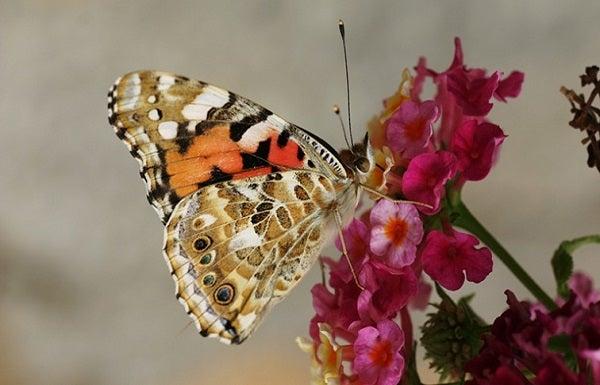 Butterfly_unsplash-copy